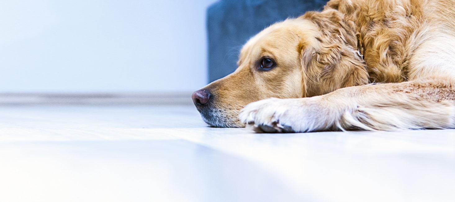 terapia-perros